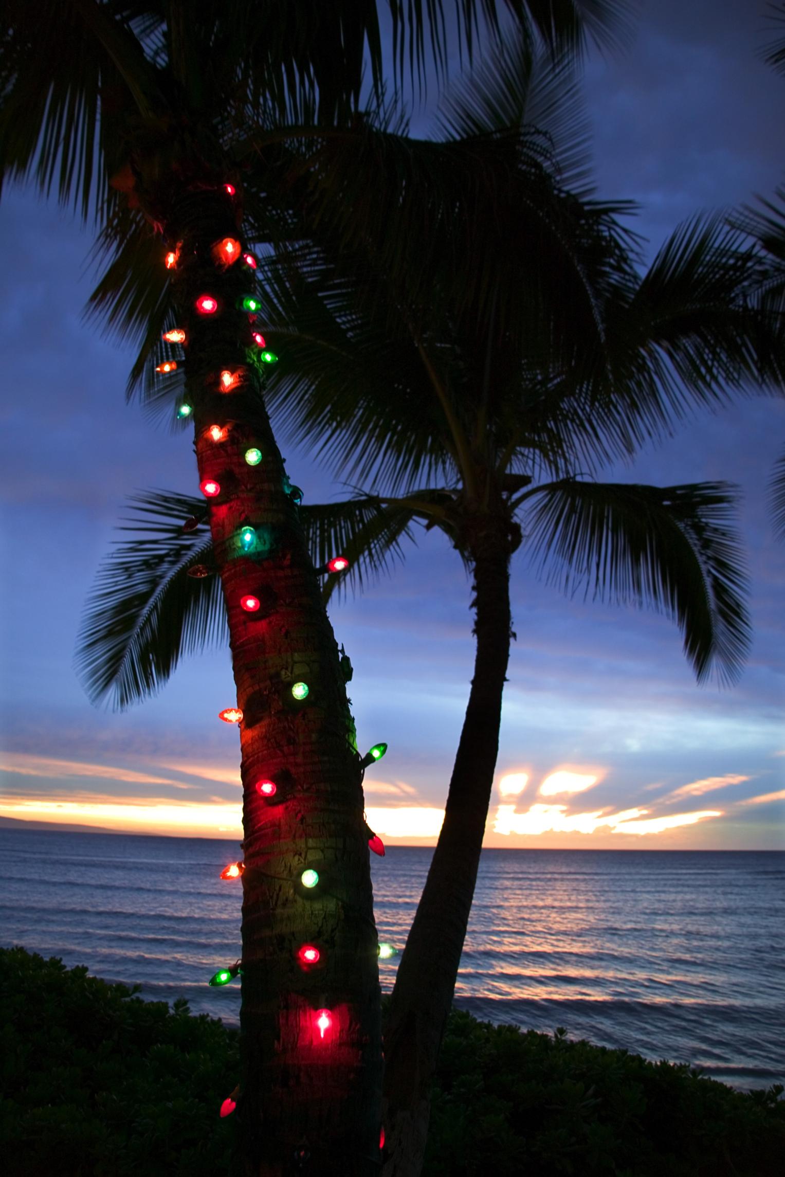 Cheapest Christmas Tree
