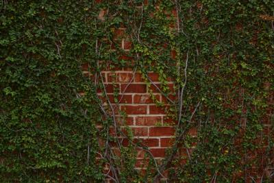 How To Kill Invasive Ground Cover Plants Home Guides
