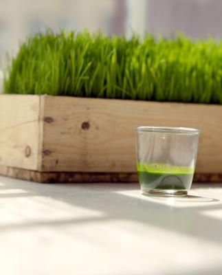 how to grow wheatgrass at home indoors