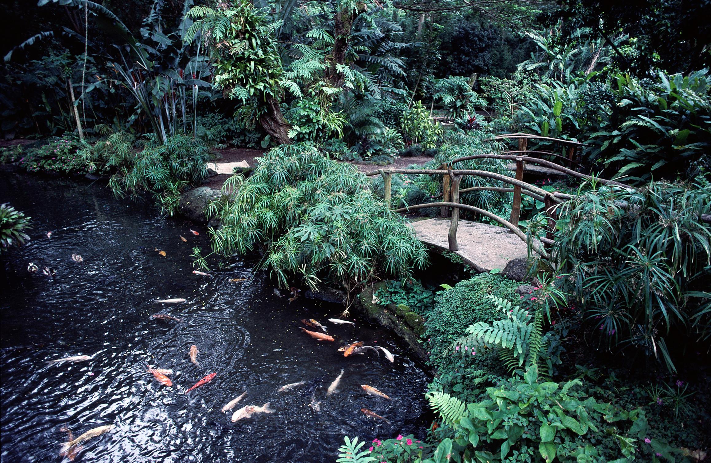 cmo elegir plantas acuticas para un estanque de peces ehow en espaol