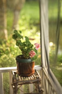 Can annual flowers grow indoors during the winter months for Indoor gardening during winter