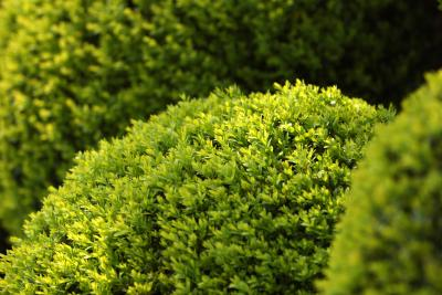 Low maintenance slow growing foundation shrubs home for Low growing plants for landscaping