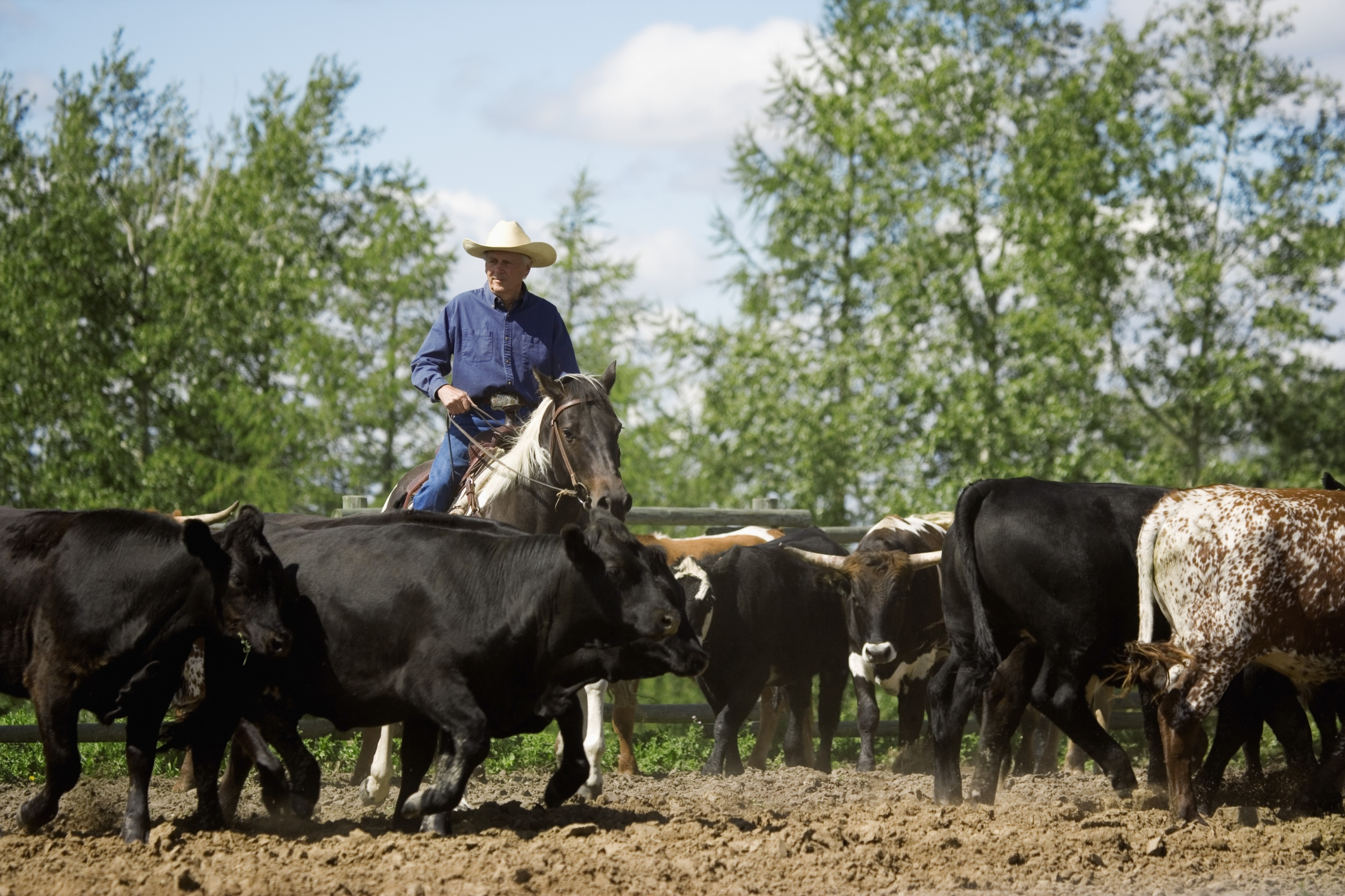 What Are the Dangers of Being a Cowboy? | Career Trend
