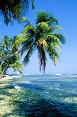 Snorkel Spots in Belize | USA Today
