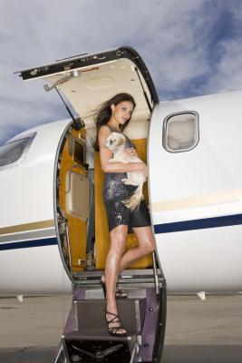 Airlines That Allow Large Dogs Usa Today