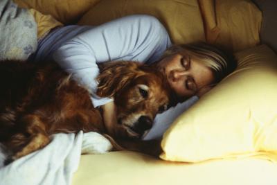 Therapeutic Foam Vs. Egg Crate Foam Dog Beds
