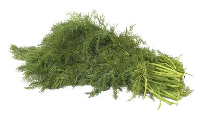 how to grow mammoth dill
