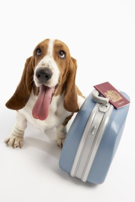 Have the paperwork for your dog's travel printed in English and Portuguese.