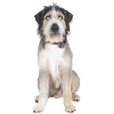 What Are The Causes Of Dog Hair Loss Scratching And Oily