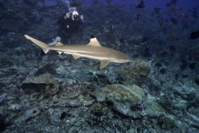 What Is the Average Income for Marine Biology Majors ...