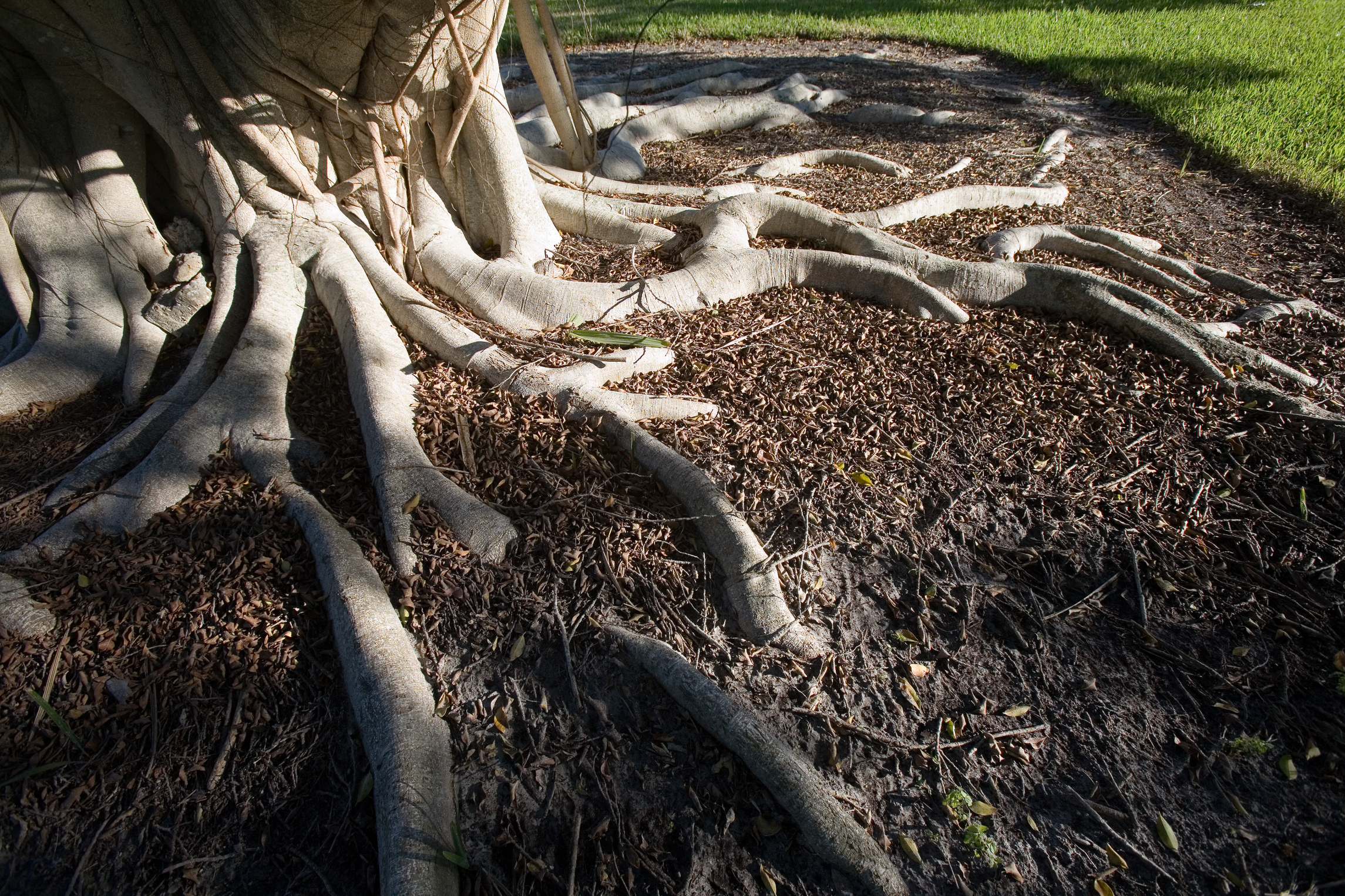 How To Landscape Around Tree Trunks Amp Roots Home Guides