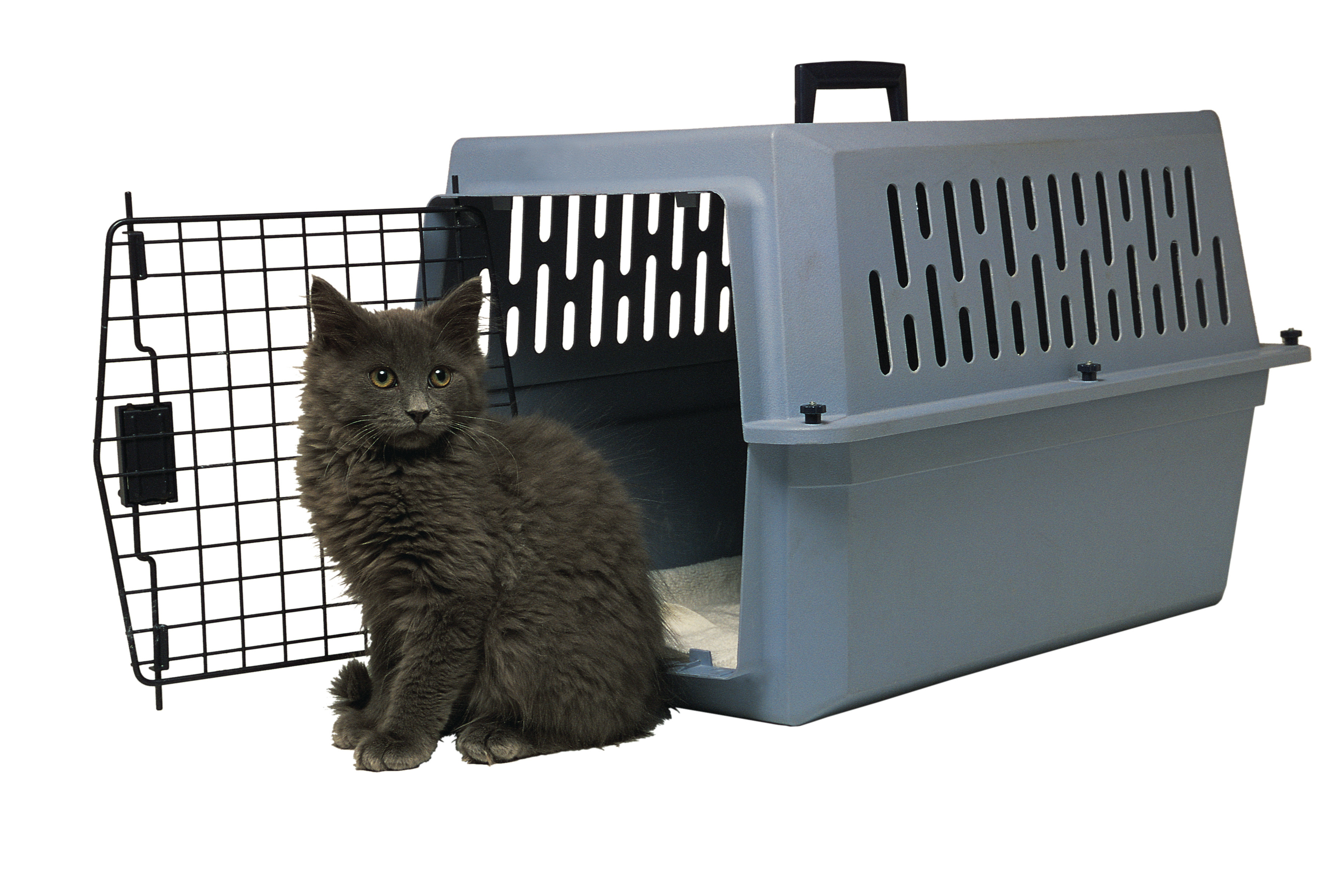 How to Get a Kennel License for Dogs | Bizfluent