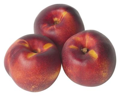 how to grow nectarines from sead