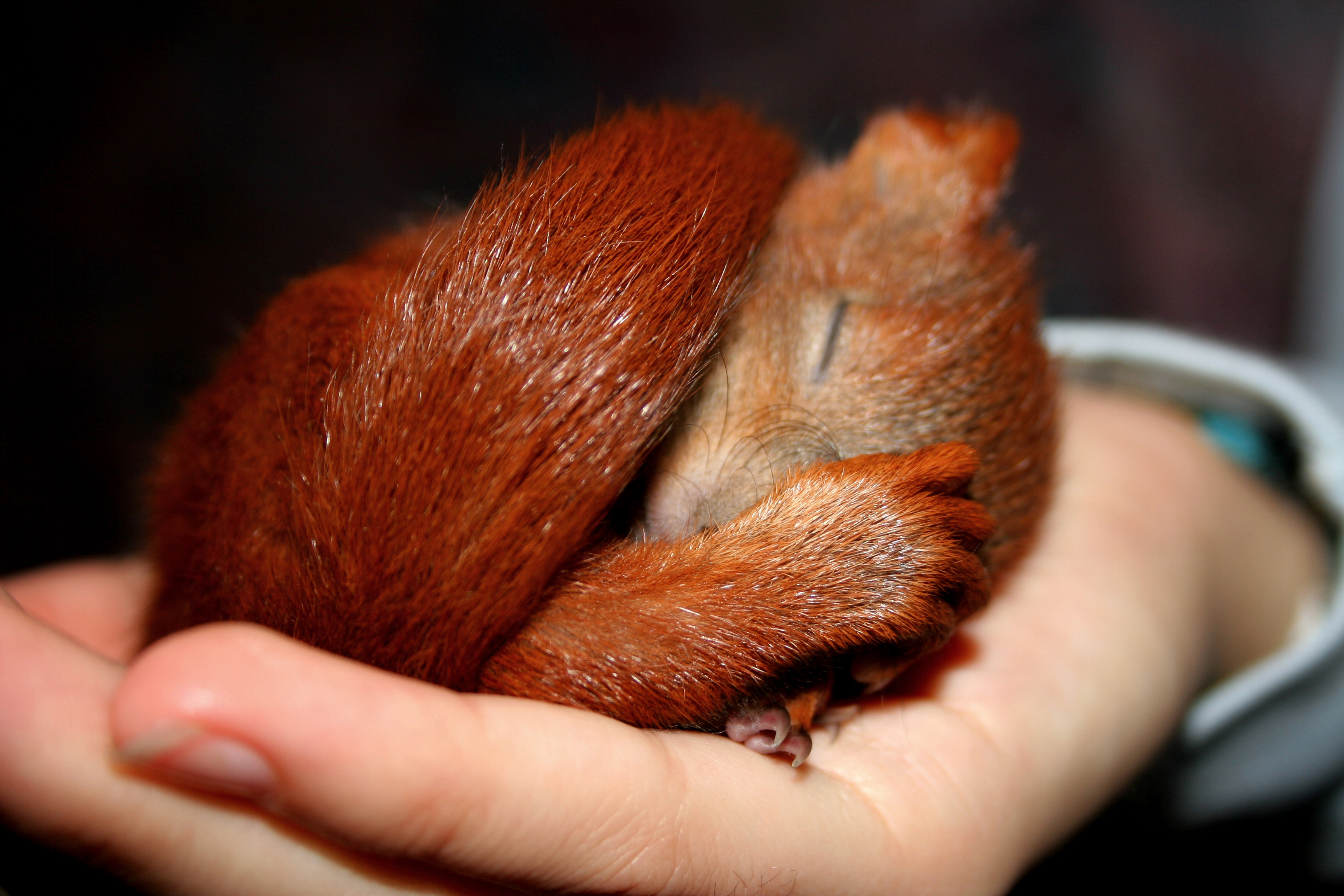 How To Care For Baby Squirrels Animals Mom Me