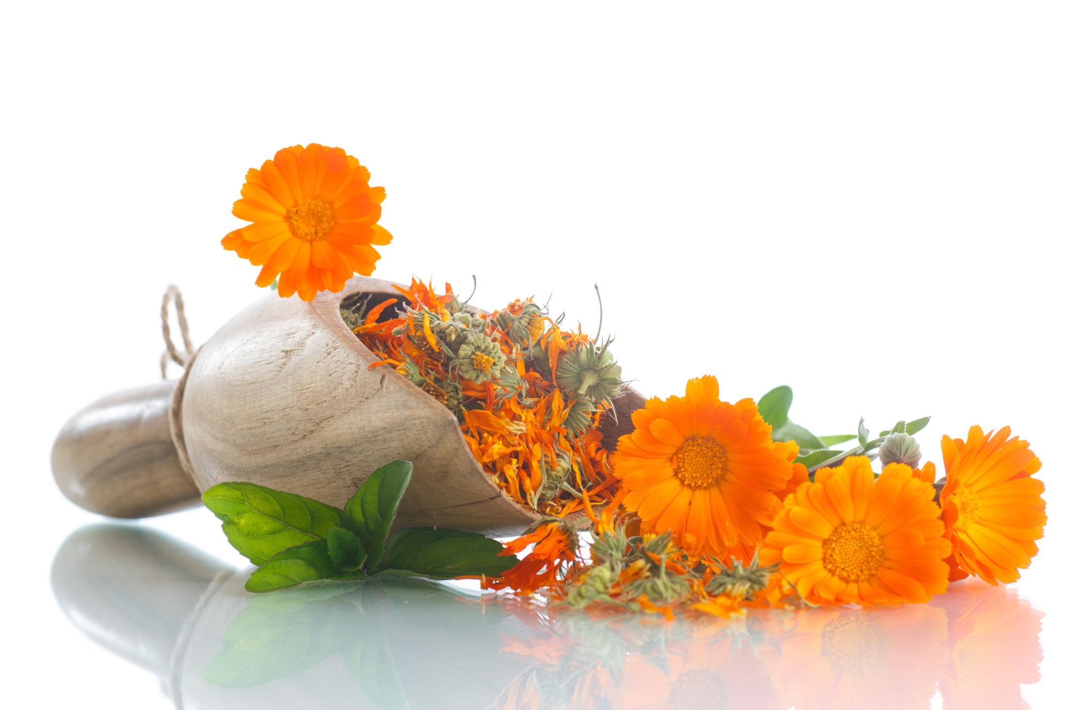 Calendula: medicinal properties and contraindications, reviews, recipes