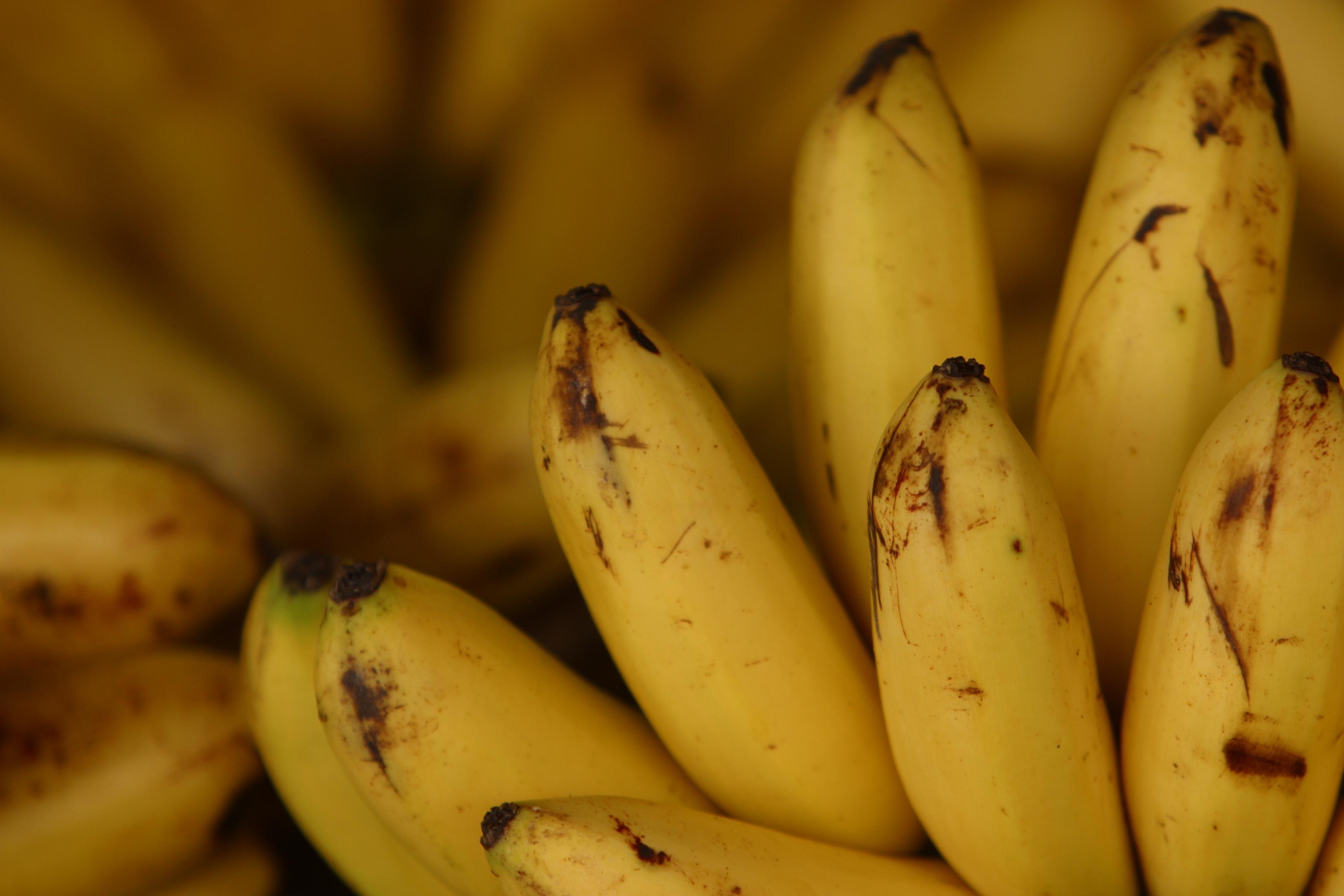 Why bananas