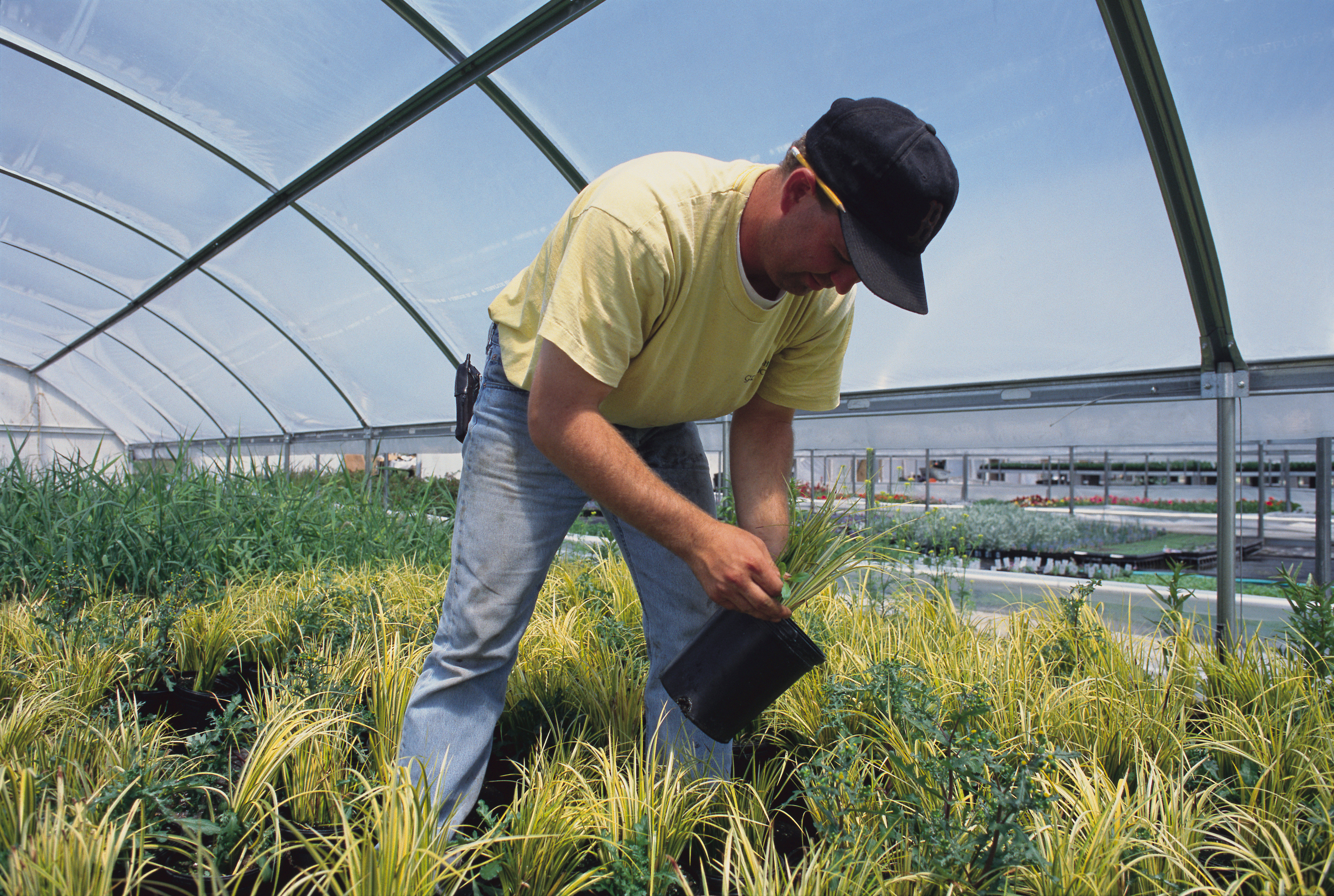 Job Description of a Greenhouse Worker | Career Trend