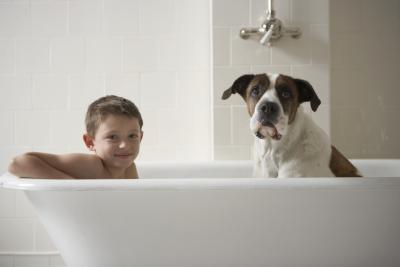 Differences Between Dog Shampoos Amp Human Shampoos Pets