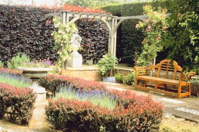 Outdoor Plants That Live All Year Round Home Guides Sf