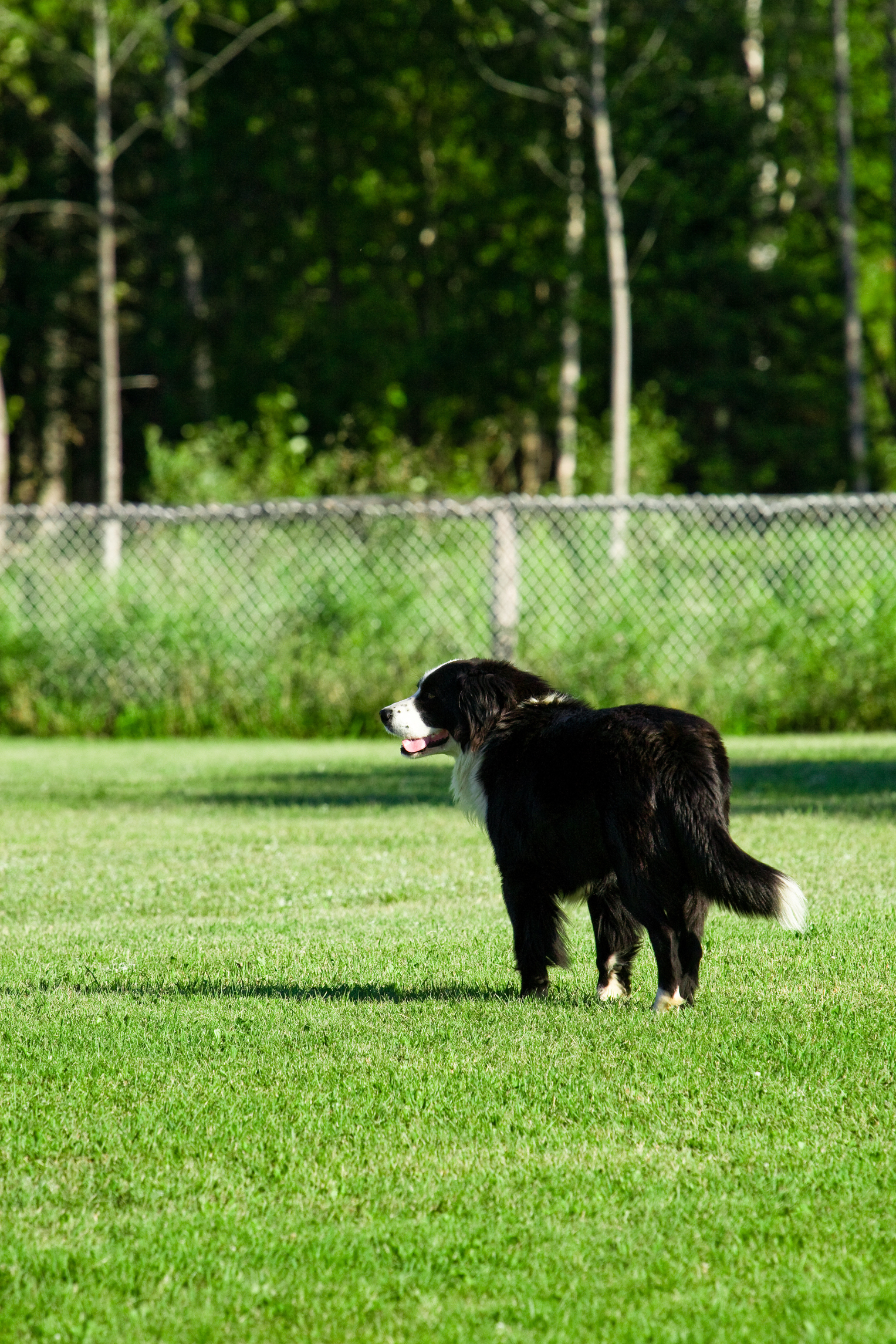 How to Make Dog Repellent for Your Yard Home Guides