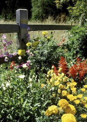 Best Time To Fertilize Flower Beds