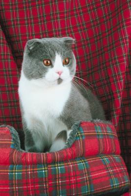 cat breeders in wisconsin