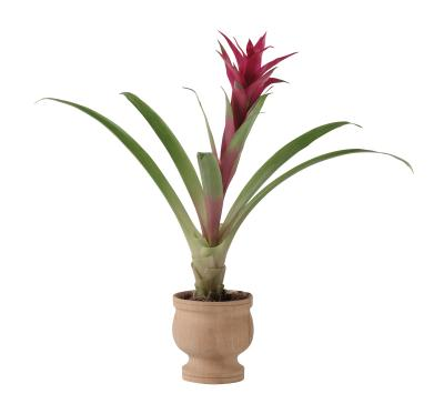 Red Leafed Indoor Plants Ehow Uk