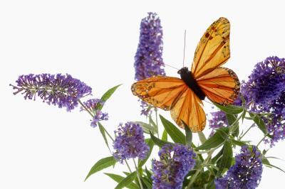 How Do Butterflies Hear Smell Amp Feel Objects Animals