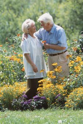 Perennials & Obedient Plants   Home Guides   SF Gate