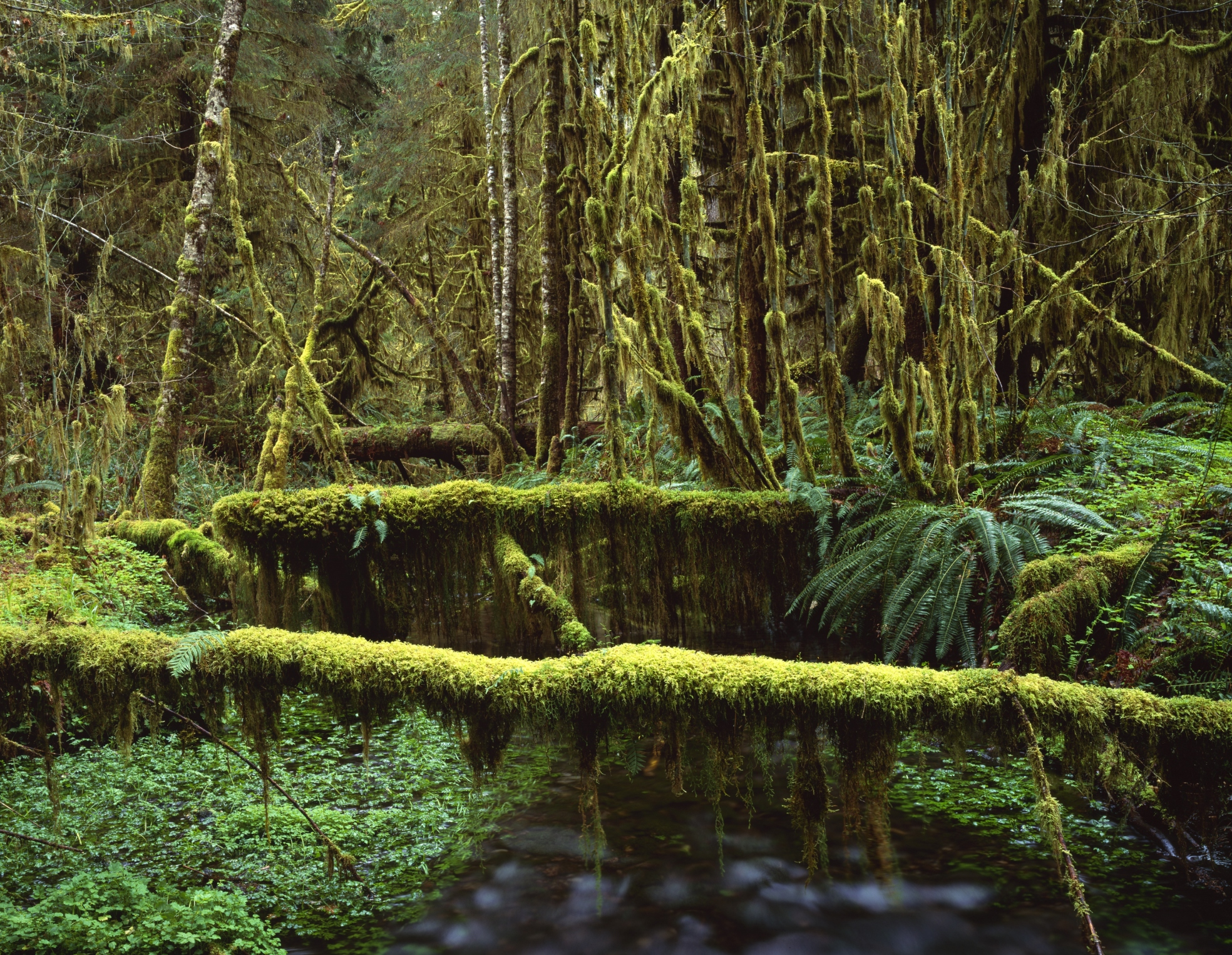 What Plants Live In The Canopy Layer
