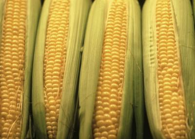 How Many Carbohydrates Are In An Ear Of Corn Healthy