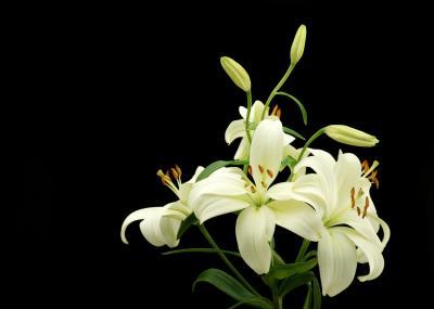 muerte flores: