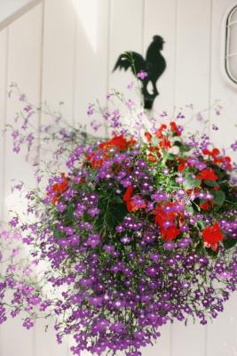How To Hang Hanging Baskets On Siding Home Guides Sf Gate