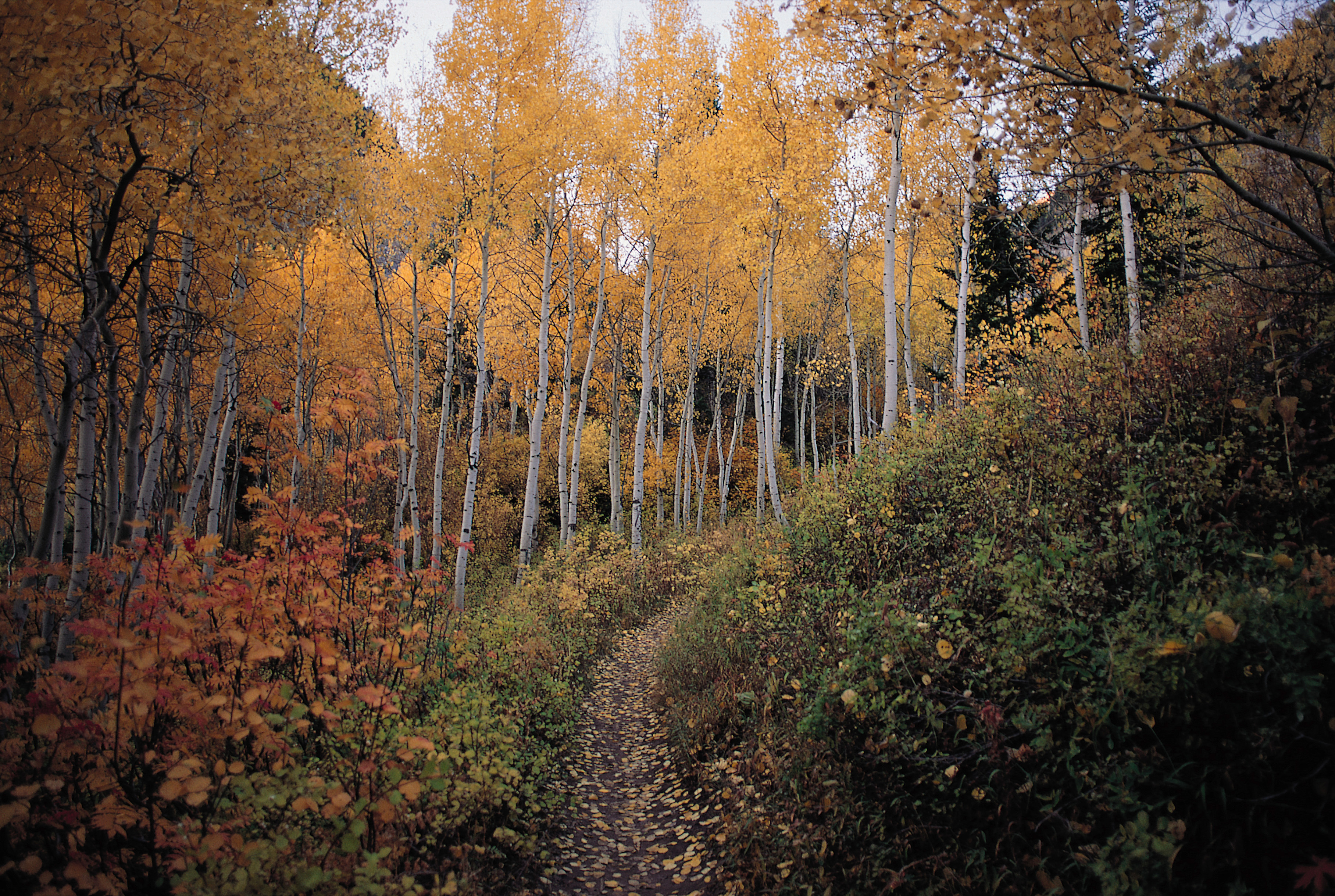 What Are The Landforms Of The Temperate Deciduous Forest
