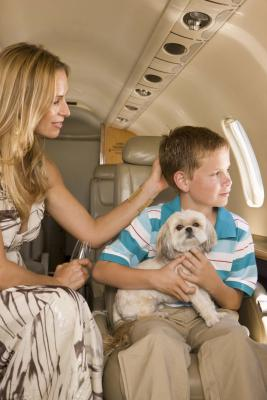Can A Dog Be Both Emotional Support And Service