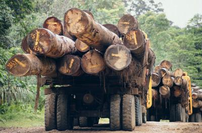 Major Reasons for Deforestation in Malaysia | Home Guides | SF Gate