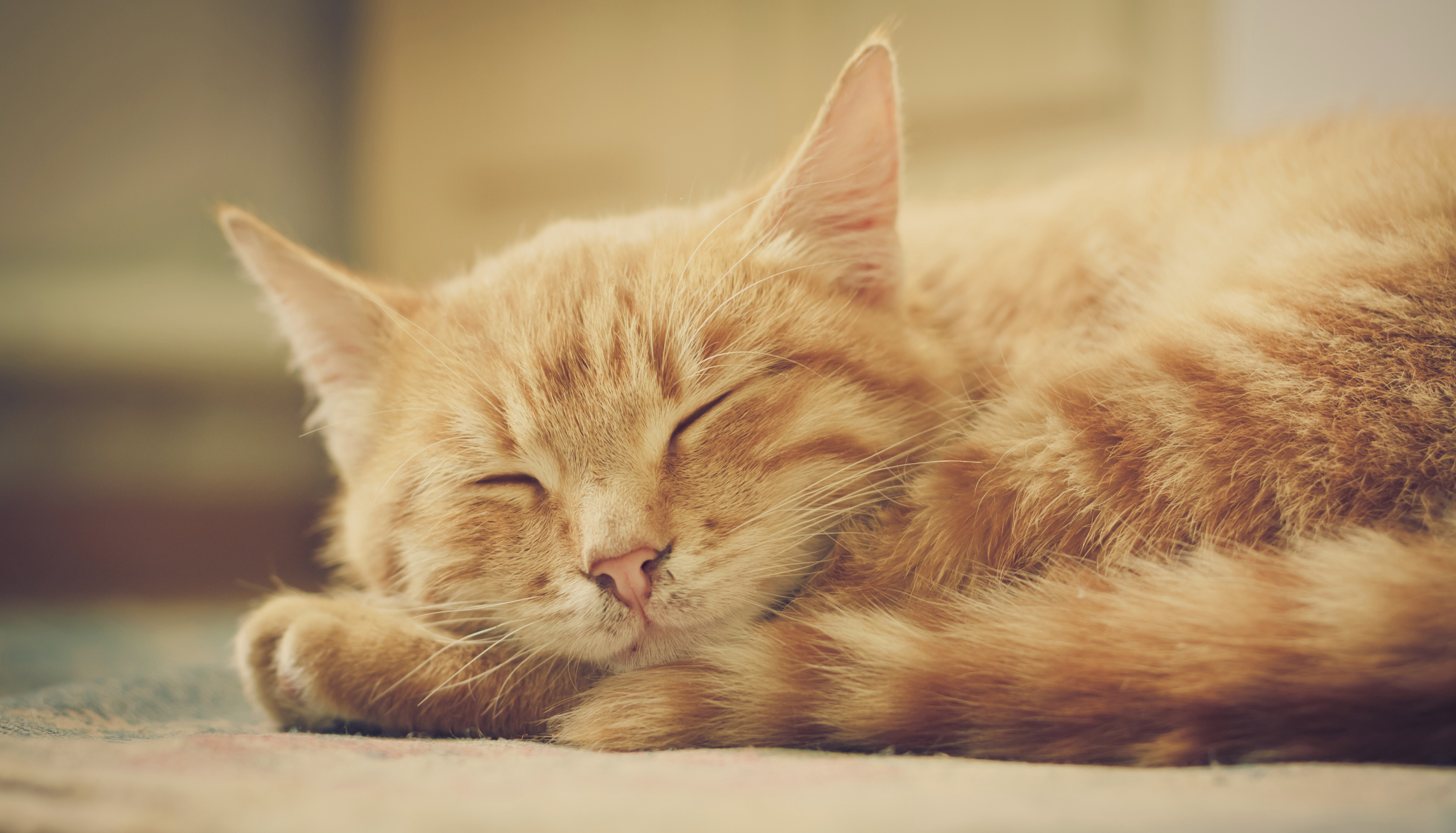 Human Sedatives For Cats