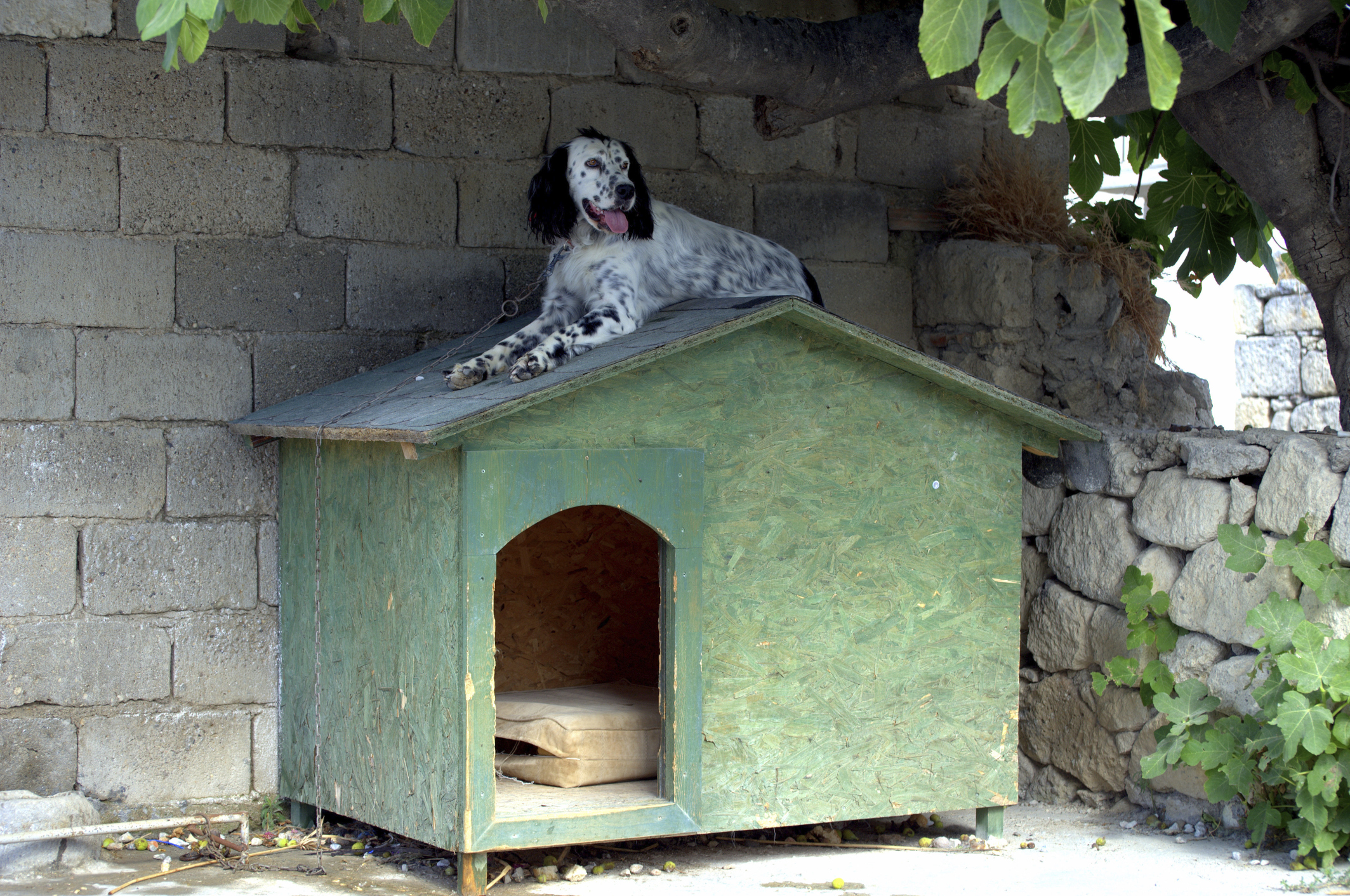 how to keep a dog house cool in summer animals. Black Bedroom Furniture Sets. Home Design Ideas