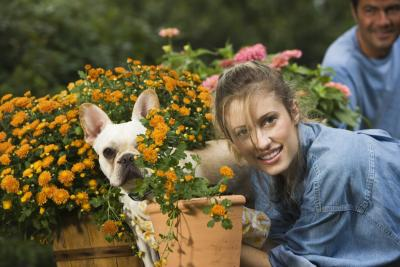 How To Protect Flower Beds From Dogs Ehow Uk