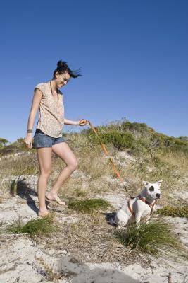Hotels In Carolina Beach Nc That Allow Pets