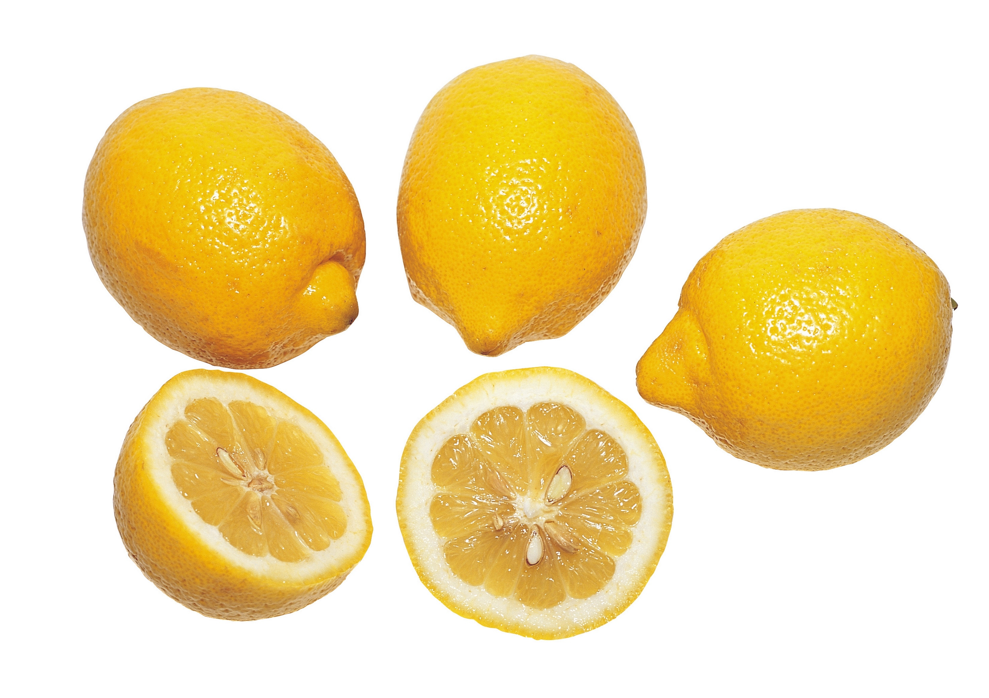 How to grow a lemon tree from grocery store lemons home for How to get lemon seeds to grow
