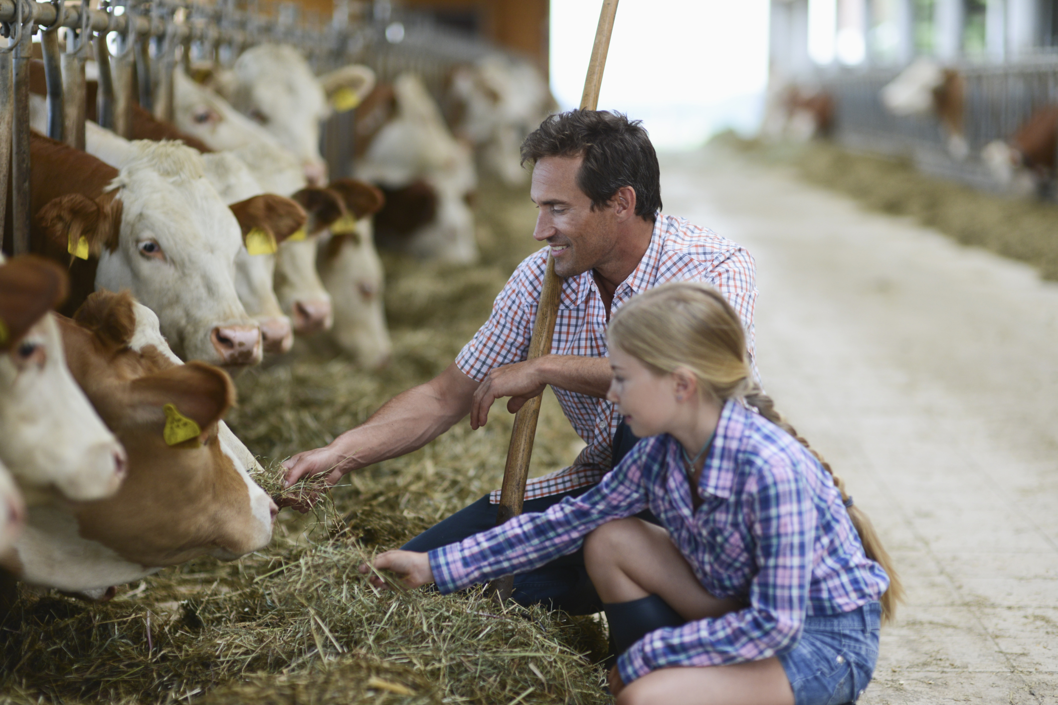 How to Become Farm Tax Exempt in South Carolina | Career Trend