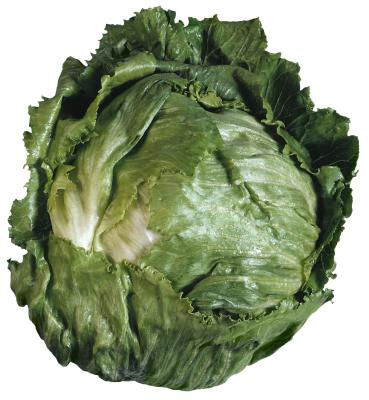 Growing tips for iceberg lettuce home guides sf gate for How to cut lettuce from garden