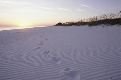 Pet Friendly Beaches Near Titusville Fl