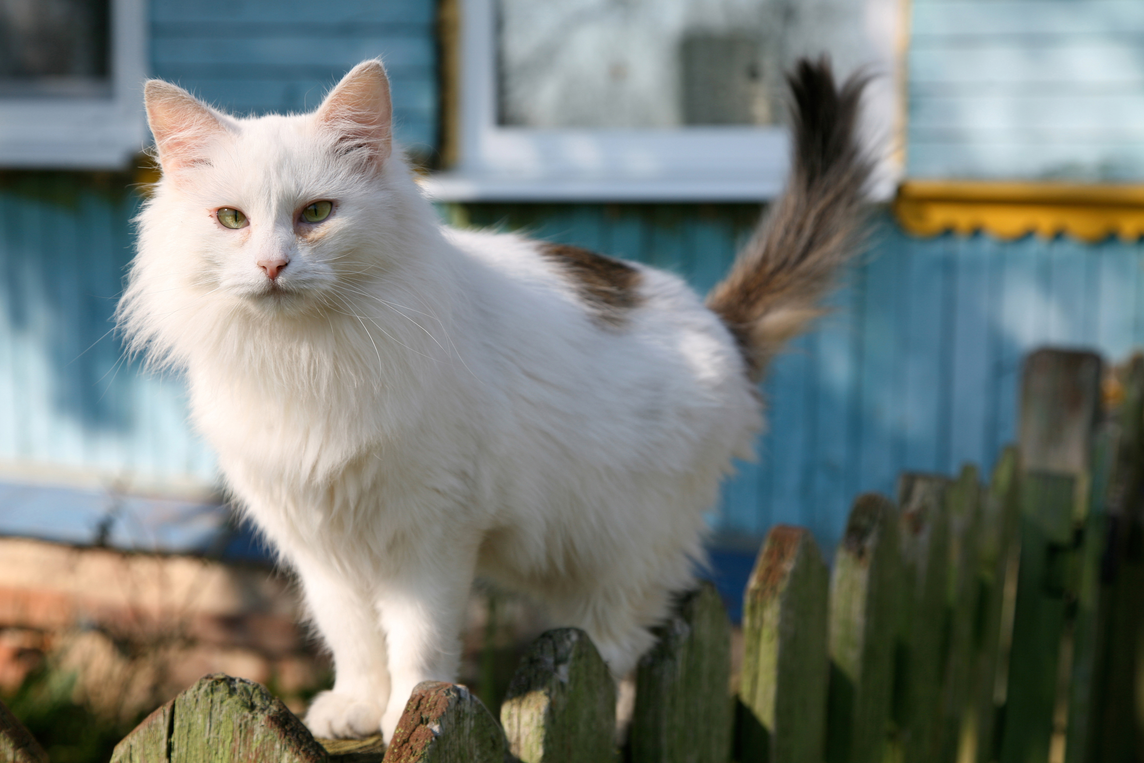how to get rid of cats in your backyard home guides sf gate