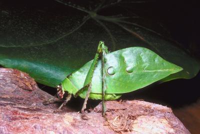 Spirit Walk Ministry  Bug amp Critter Spirits