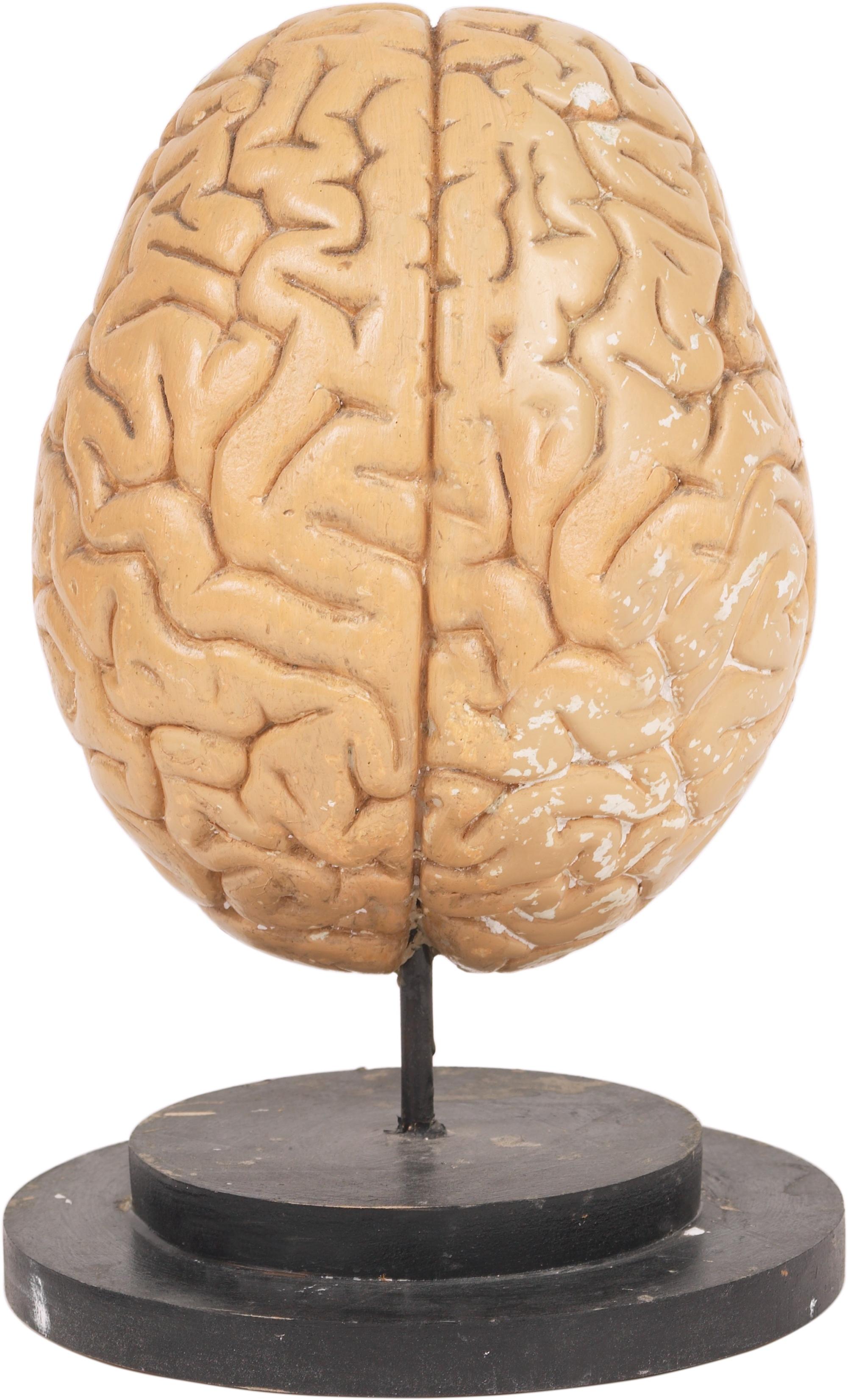 The ketogenic diet may alter neurotransmitter balance.