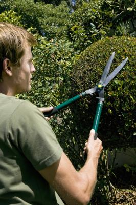 The Annual Salary Of A Gardener