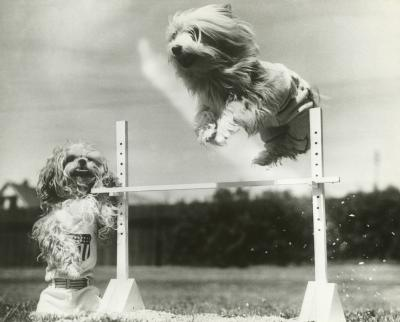 How To Build Dog Agility Obstacles Pets