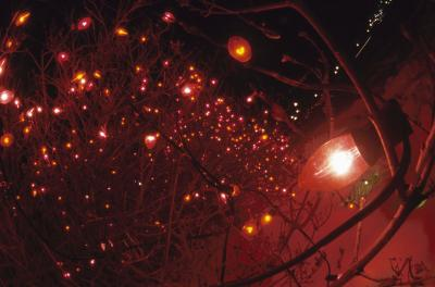 How To Attach Christmas Lights To Outdoor Bare Branch Trees Home Guides Sf Gate